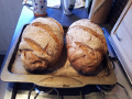 Two 1 kg (flour weight) malted grain loaves.